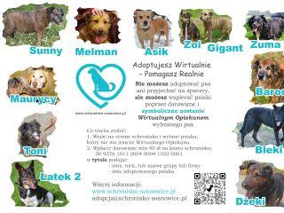 adopcje wirtualne plakat